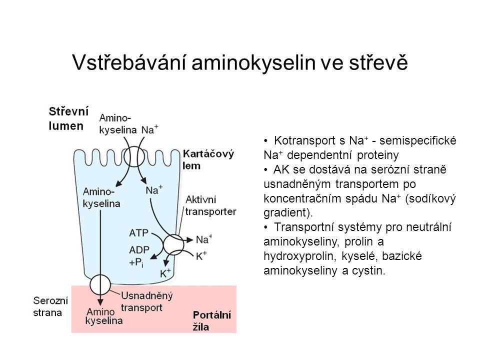 Vstřebávání aminokyselin ve střevě Kotransport s Na + - semispecifické Na + dependentní proteiny AK se dostává na serózní straně usnadněným transporte