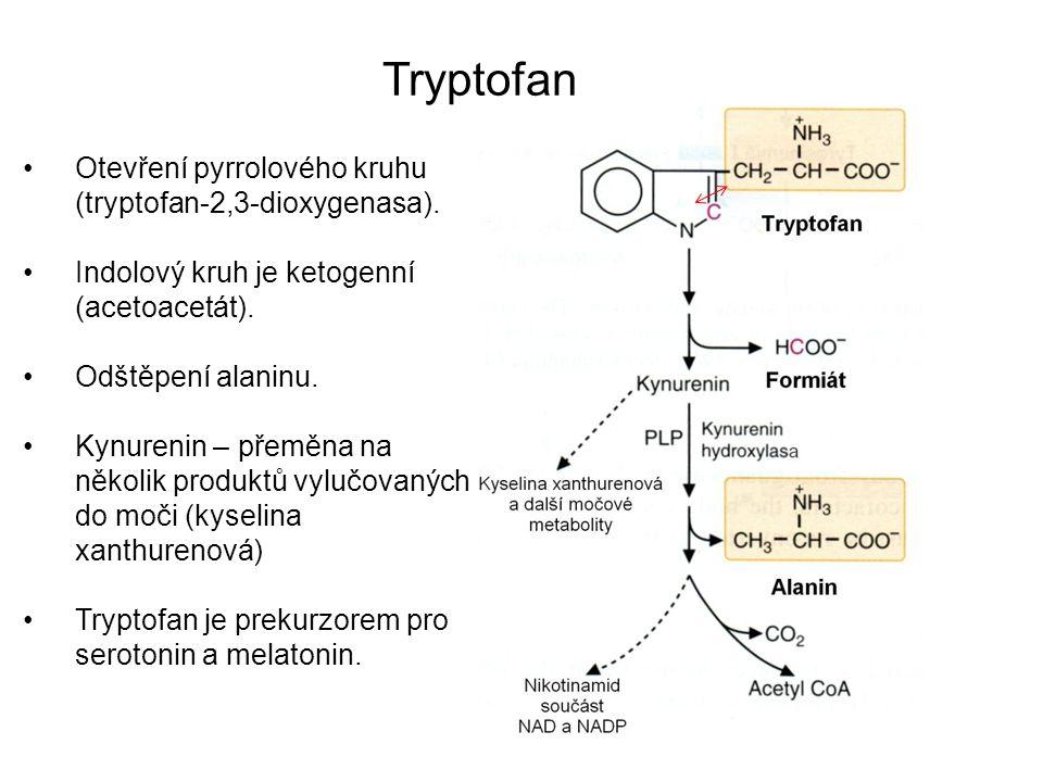 Otevření pyrrolového kruhu (tryptofan-2,3-dioxygenasa). Indolový kruh je ketogenní (acetoacetát). Odštěpení alaninu. Kynurenin – přeměna na několik pr
