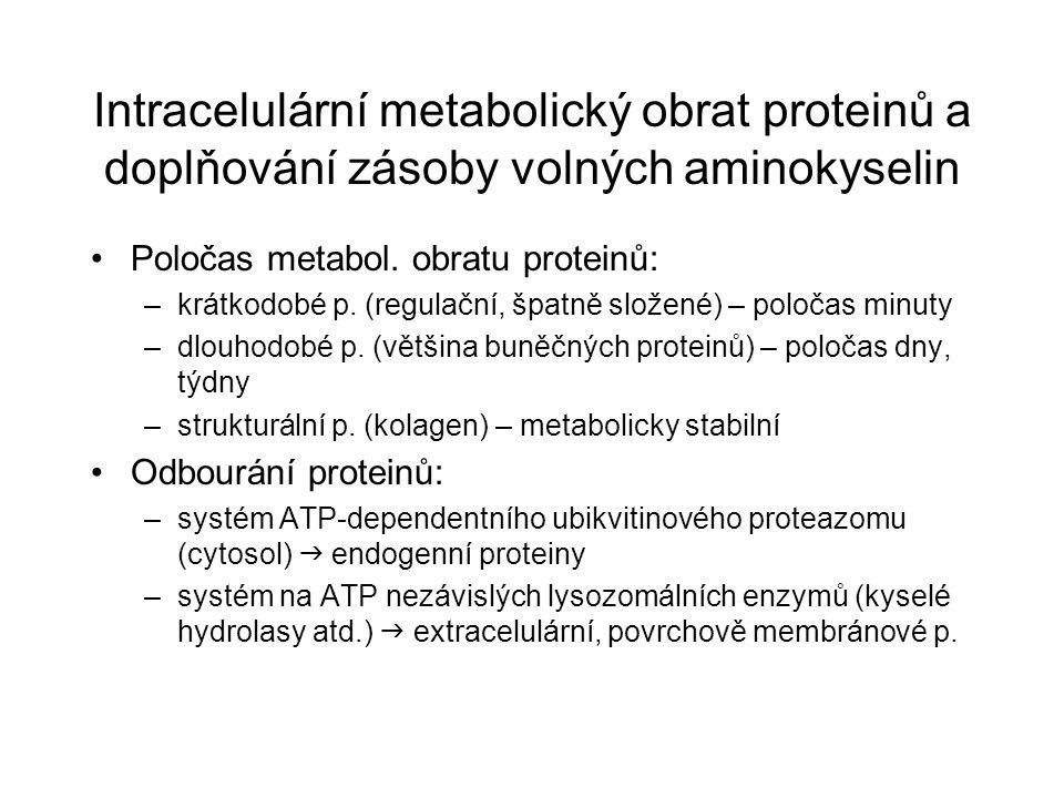 Intracelulární metabolický obrat proteinů a doplňování zásoby volných aminokyselin Poločas metabol. obratu proteinů: –krátkodobé p. (regulační, špatně