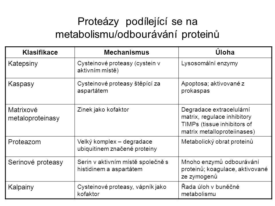 KlasifikaceMechanismusÚloha Katepsiny Cysteinové proteasy (cystein v aktivním místě) Lysosomální enzymy Kaspasy Cysteinové proteasy štěpící za aspartá