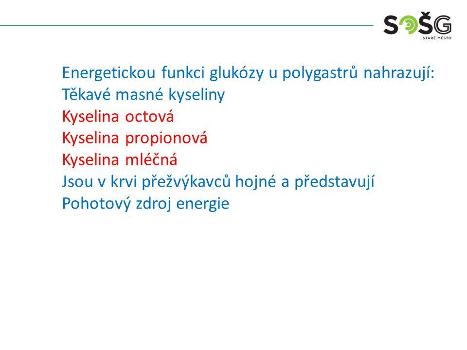 Energetickou funkci glukózy u polygastrů nahrazují: Těkavé masné kyseliny Kyselina octová Kyselina propionová Kyselina mléčná Jsou v krvi přežvýkavců hojné a představují Pohotový zdroj energie