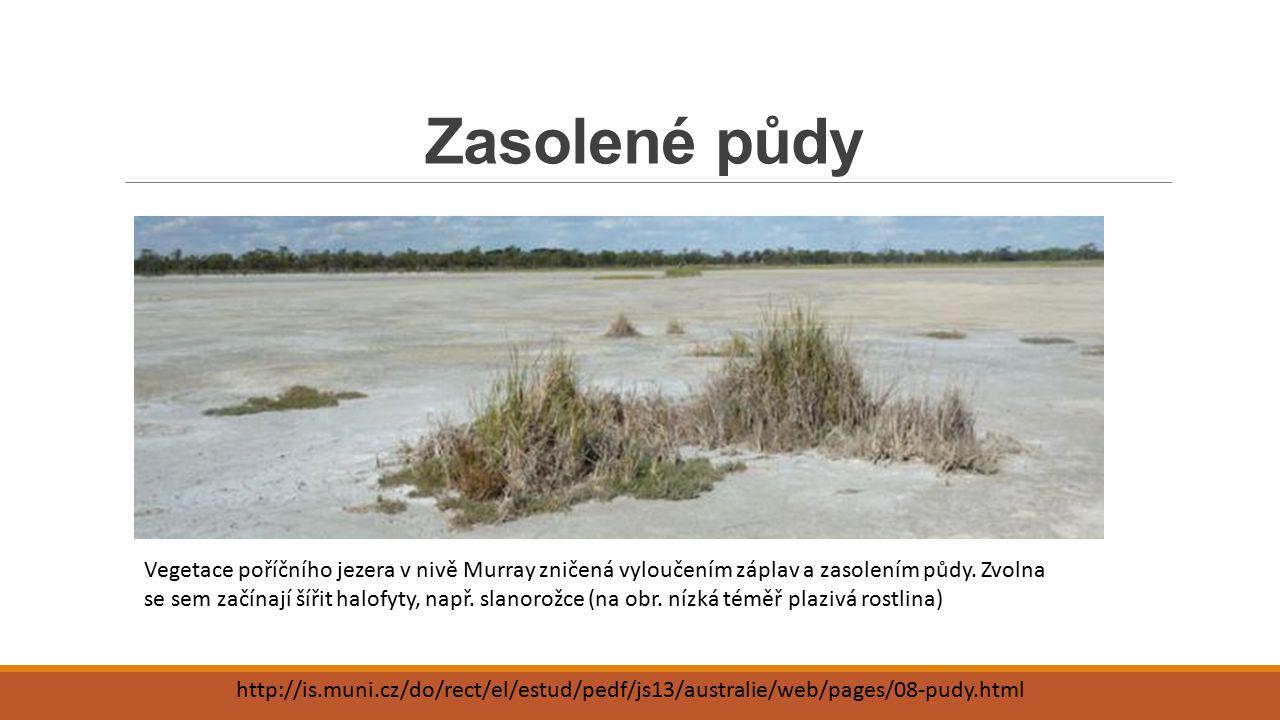 Zasolené půdy http://is.muni.cz/do/rect/el/estud/pedf/js13/australie/web/pages/08-pudy.html Vegetace poříčního jezera v nivě Murray zničená vyloučením