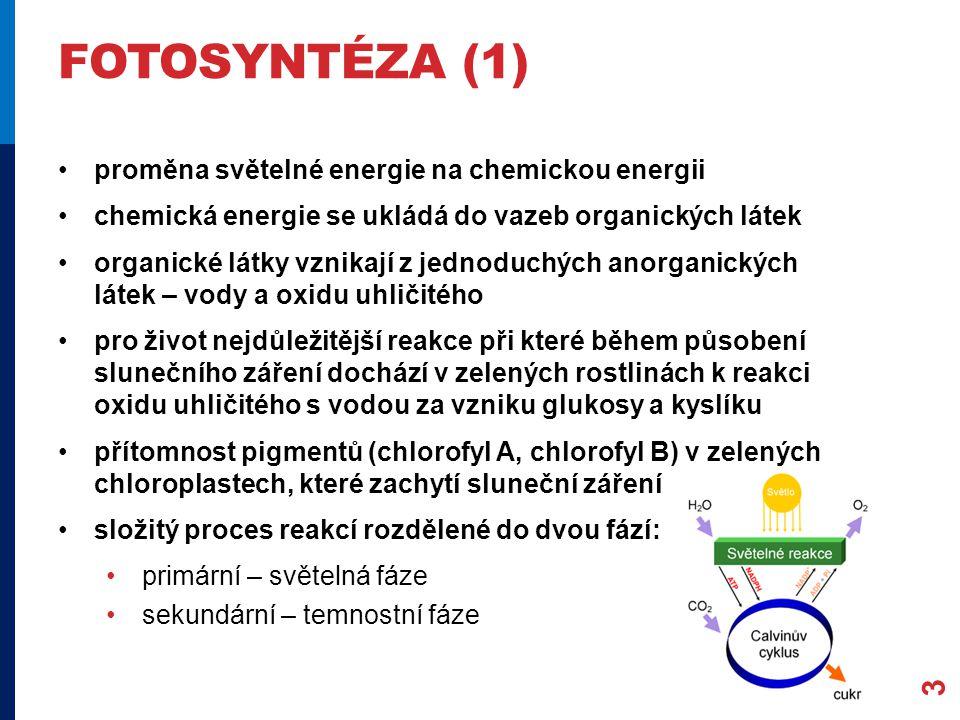 FOTOSYNTÉZA (1) proměna světelné energie na chemickou energii chemická energie se ukládá do vazeb organických látek organické látky vznikají z jednoduchých anorganických látek – vody a oxidu uhličitého pro život nejdůležitější reakce při které během působení slunečního záření dochází v zelených rostlinách k reakci oxidu uhličitého s vodou za vzniku glukosy a kyslíku přítomnost pigmentů (chlorofyl A, chlorofyl B) v zelených chloroplastech, které zachytí sluneční záření složitý proces reakcí rozdělené do dvou fází: primární – světelná fáze sekundární – temnostní fáze 3