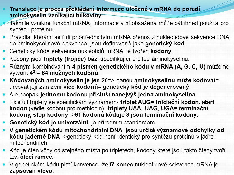 Translace je proces překládání informace uložené v mRNA do pořadí aminokyselin vznikající bílkoviny. Jakmile vznikne funkční mRNA, informace v ní obsa