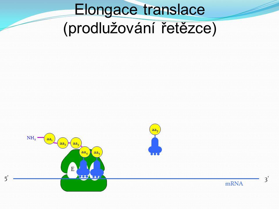 EPA 5' 3' mRNA aa 3 aa 2 aa 1 NH 2 aa 4 aa 5 Elongace translace (prodlužování řetězce)