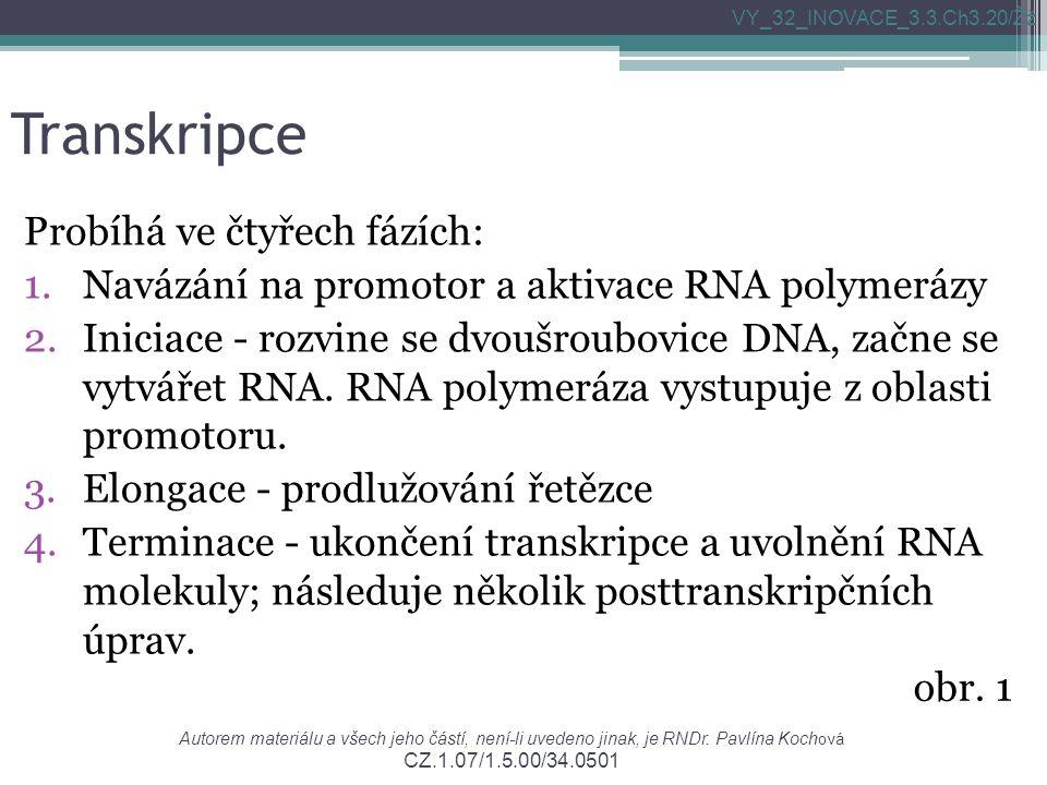 Transkripce Probíhá ve čtyřech fázích: 1.Navázání na promotor a aktivace RNA polymerázy 2.Iniciace - rozvine se dvoušroubovice DNA, začne se vytvářet RNA.