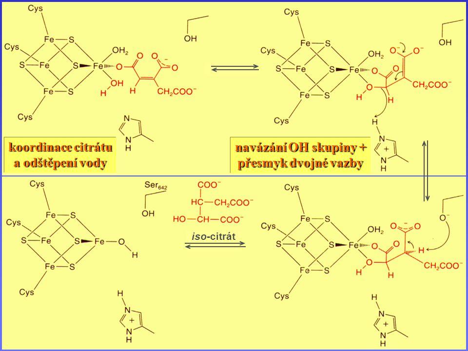 Akonitáza iso-citrát koordinace citrátu a odštěpení vody navázání OH skupiny + přesmyk dvojné vazby