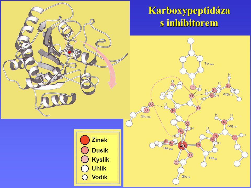Zn Karboxypeptidáza s inhibitorem Zinek Dusík Kyslík Uhlík Vodík