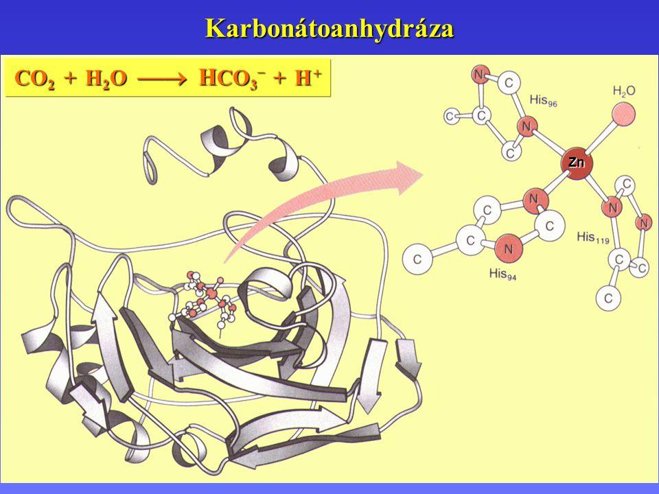 Karbonátoanhydráza Zn CO 2 + H 2 O  H CO 3 – + H +