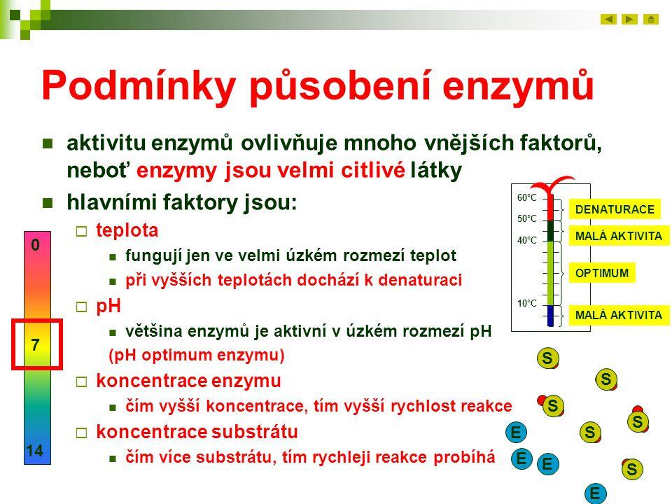 Podmínky působení enzymů aktivitu enzymů ovlivňuje mnoho vnějších faktorů, neboť enzymy jsou velmi citlivé látky hlavními faktory jsou:  teplota fung