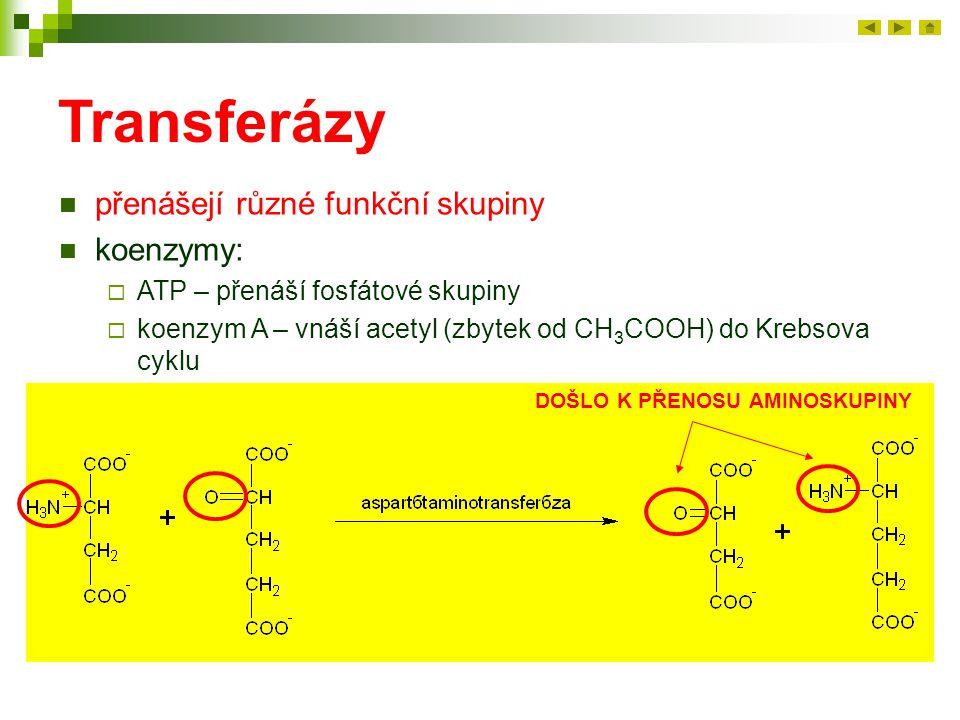 Transferázy přenášejí různé funkční skupiny koenzymy:  ATP – přenáší fosfátové skupiny  koenzym A – vnáší acetyl (zbytek od CH 3 COOH) do Krebsova c