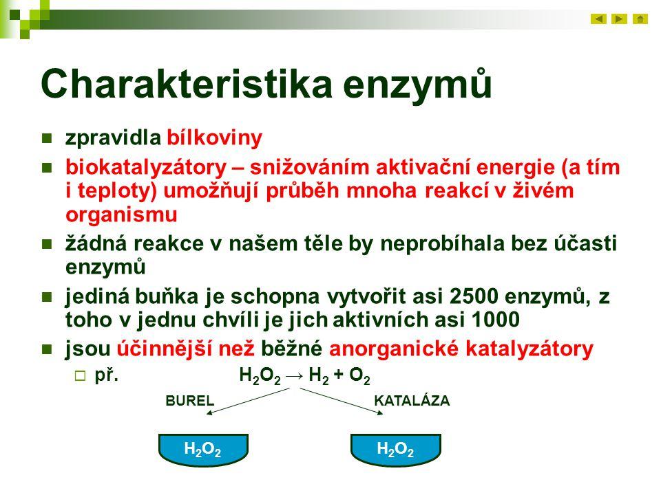 Charakteristika enzymů zpravidla bílkoviny biokatalyzátory – snižováním aktivační energie (a tím i teploty) umožňují průběh mnoha reakcí v živém organ