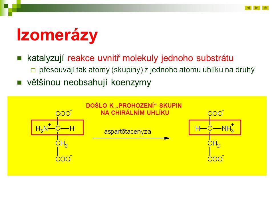 Izomerázy katalyzují reakce uvnitř molekuly jednoho substrátu  přesouvají tak atomy (skupiny) z jednoho atomu uhlíku na druhý většinou neobsahují koe