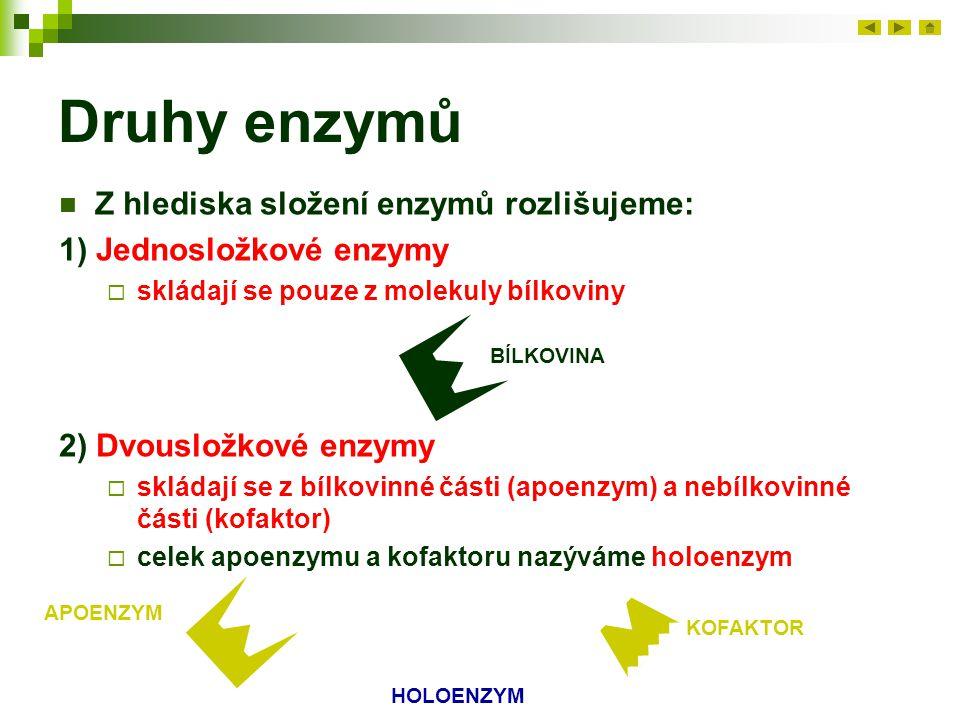 Druhy enzymů Z hlediska složení enzymů rozlišujeme: 1) Jednosložkové enzymy  skládají se pouze z molekuly bílkoviny BÍLKOVINA 2) Dvousložkové enzymy