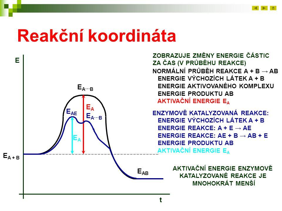 Reakční koordináta ZOBRAZUJE ZMĚNY ENERGIE ČÁSTIC ZA ČAS (V PRŮBĚHU REAKCE) E t NORMÁLNÍ PRŮBĚH REAKCE A + B → AB ENERGIE VÝCHOZÍCH LÁTEK A + B ENERGI