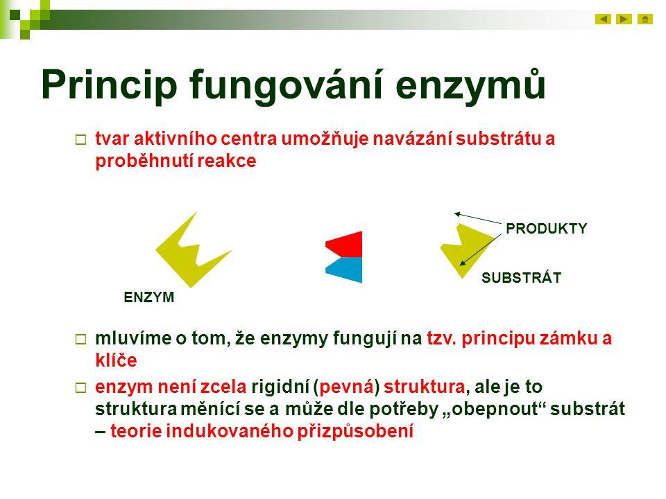 Princip fungování enzymů  tvar aktivního centra umožňuje navázání substrátu a proběhnutí reakce ENZYM SUBSTRÁT PRODUKTY  mluvíme o tom, že enzymy fu