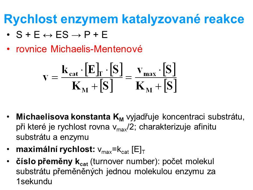 Rychlost enzymem katalyzované reakce S + E ↔ ES → P + E rovnice Michaelis-Mentenové Michaelisova konstanta K M vyjadřuje koncentraci substrátu, při kt