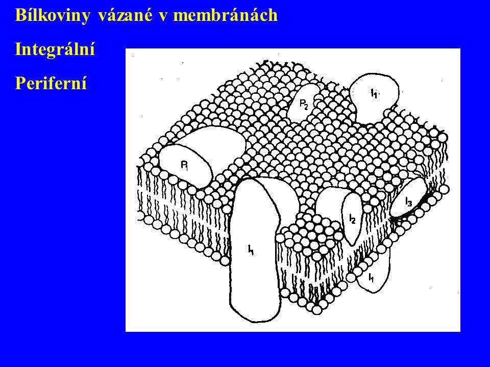 Bílkoviny vázané v membránách Integrální Periferní