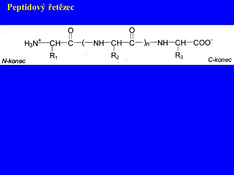 Peptidový řetězec