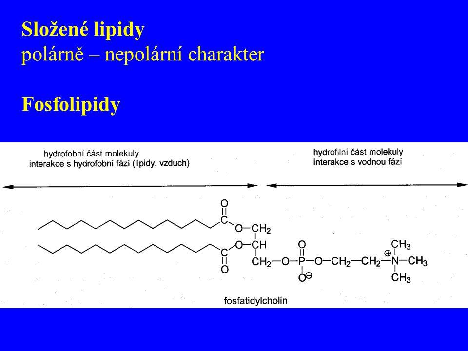 Složené lipidy polárně – nepolární charakter Fosfolipidy
