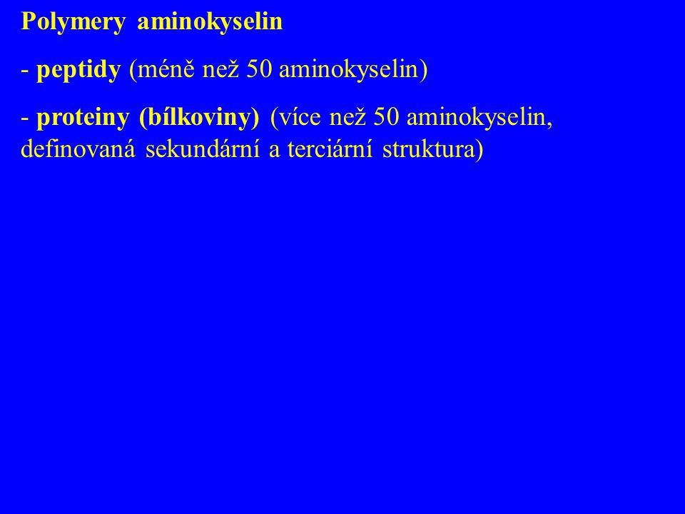 Polymery aminokyselin - peptidy (méně než 50 aminokyselin) - proteiny (bílkoviny) (více než 50 aminokyselin, definovaná sekundární a terciární struktu