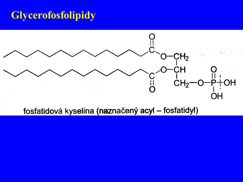Glycerofosfolipidy