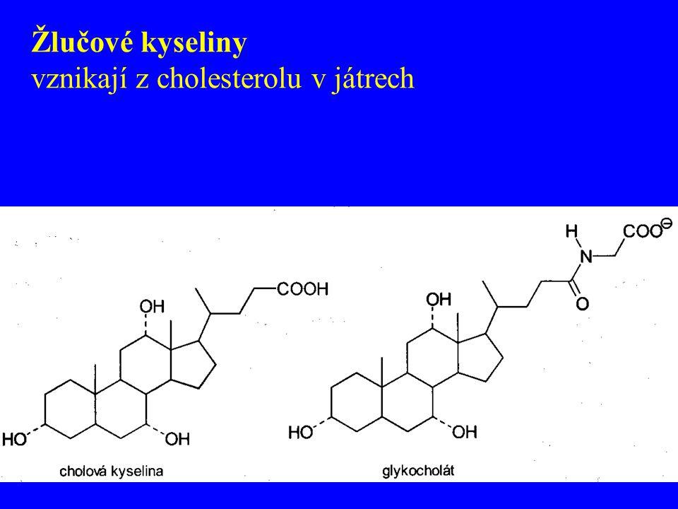Žlučové kyseliny vznikají z cholesterolu v játrech