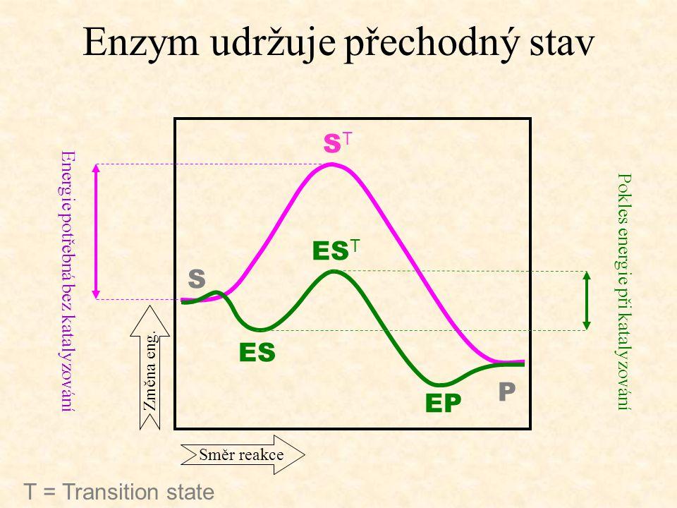 Enzym udržuje přechodný stav S P ES ES T EP STST E nergie potřebná bez katalyzování Pokles energie při katalyzování T = Transition state Směr reakce Z