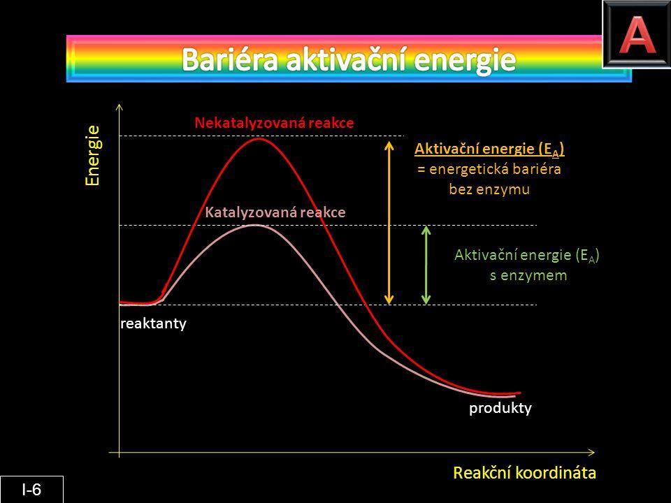 Reakční koordináta Energie reaktanty produkty Nekatalyzovaná reakce Katalyzovaná reakce Aktivační energie (E A ) = energetická bariéra bez enzymu Akti