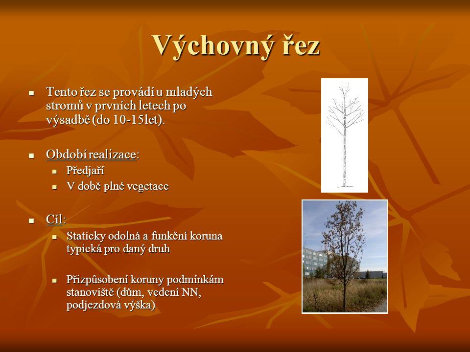 Výchovný řez Tento řez se provádí u mladých stromů v prvních letech po výsadbě (do 10-15let). Tento řez se provádí u mladých stromů v prvních letech p