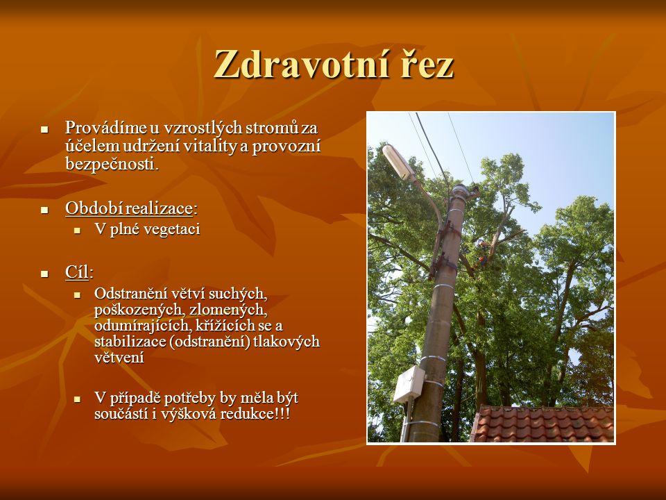 Zdravotní řez Provádíme u vzrostlých stromů za účelem udržení vitality a provozní bezpečnosti. Provádíme u vzrostlých stromů za účelem udržení vitalit