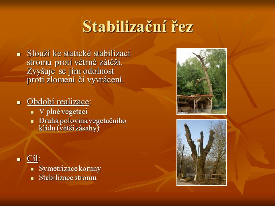 Stabilizační řez Slouží ke statické stabilizaci stromu proti větrné zátěži. Zvyšuje se jím odolnost proti zlomení či vyvrácení. Slouží ke statické sta