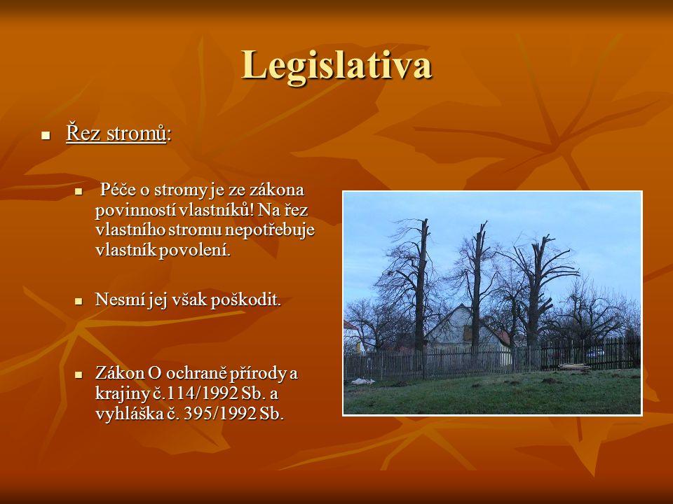 Legislativa Řez stromů: Řez stromů: Péče o stromy je ze zákona povinností vlastníků! Na řez vlastního stromu nepotřebuje vlastník povolení. Péče o str