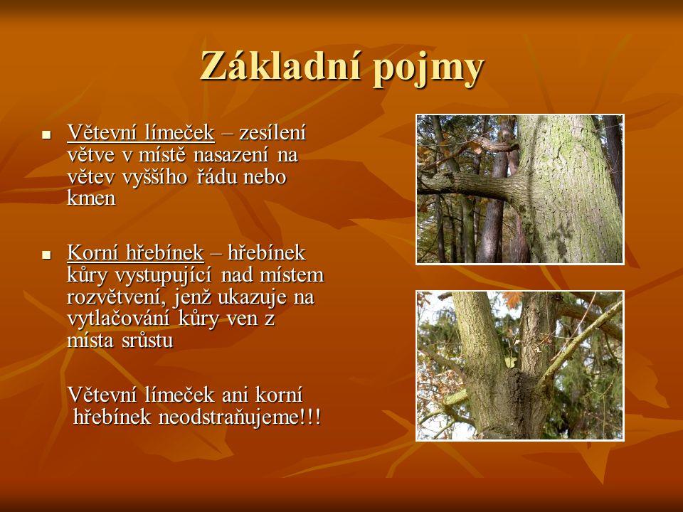 Základní pojmy Větevní límeček – zesílení větve v místě nasazení na větev vyššího řádu nebo kmen Větevní límeček – zesílení větve v místě nasazení na