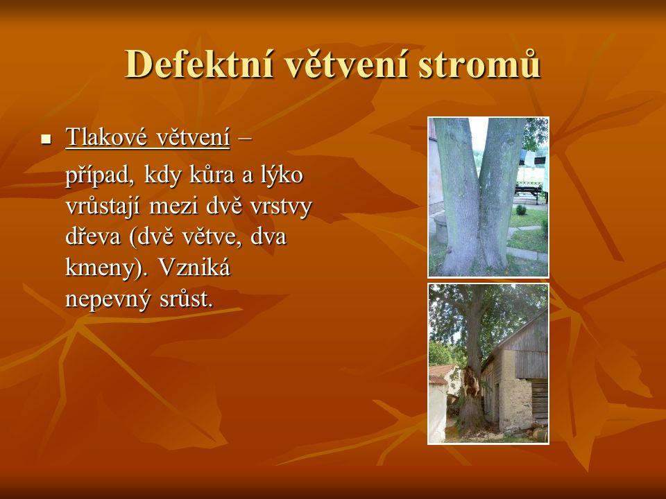 Defektní větvení stromů Tlakové větvení – Tlakové větvení – případ, kdy kůra a lýko vrůstají mezi dvě vrstvy dřeva (dvě větve, dva kmeny). Vzniká nepe