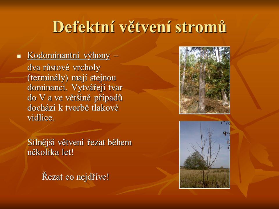 Defektní větvení stromů Kodominantní výhony – Kodominantní výhony – dva růstové vrcholy (terminály) mají stejnou dominanci. Vytvářejí tvar do V a ve v