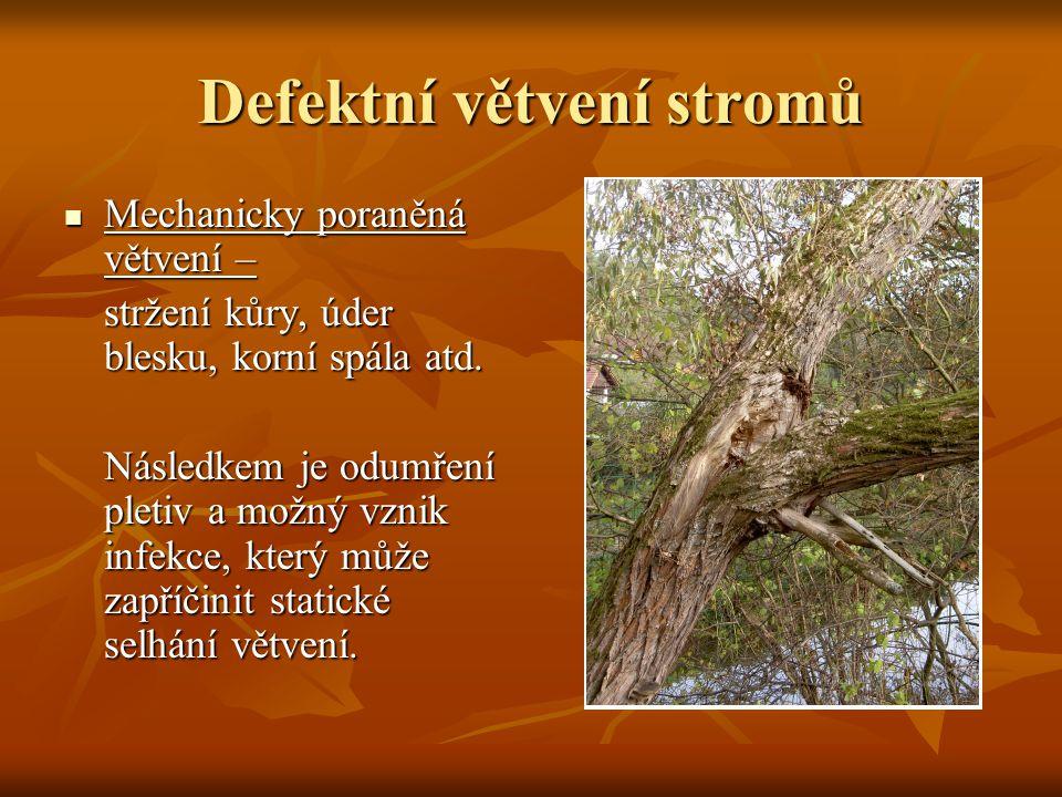 Defektní větvení stromů Mechanicky poraněná větvení – Mechanicky poraněná větvení – stržení kůry, úder blesku, korní spála atd. Následkem je odumření