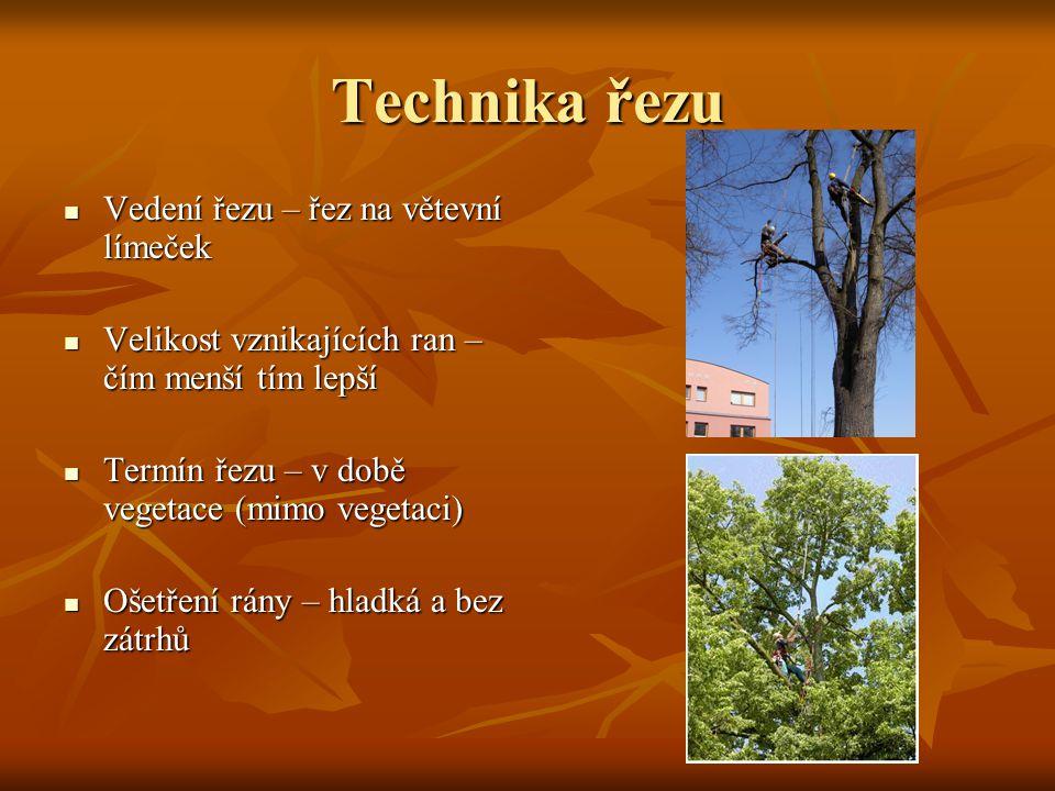 Technika řezu Vedení řezu – řez na větevní límeček Vedení řezu – řez na větevní límeček Velikost vznikajících ran – čím menší tím lepší Velikost vznik