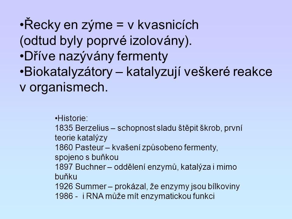 Řecky en zýme = v kvasnicích (odtud byly poprvé izolovány). Dříve nazývány fermenty Biokatalyzátory – katalyzují veškeré reakce v organismech. Histori