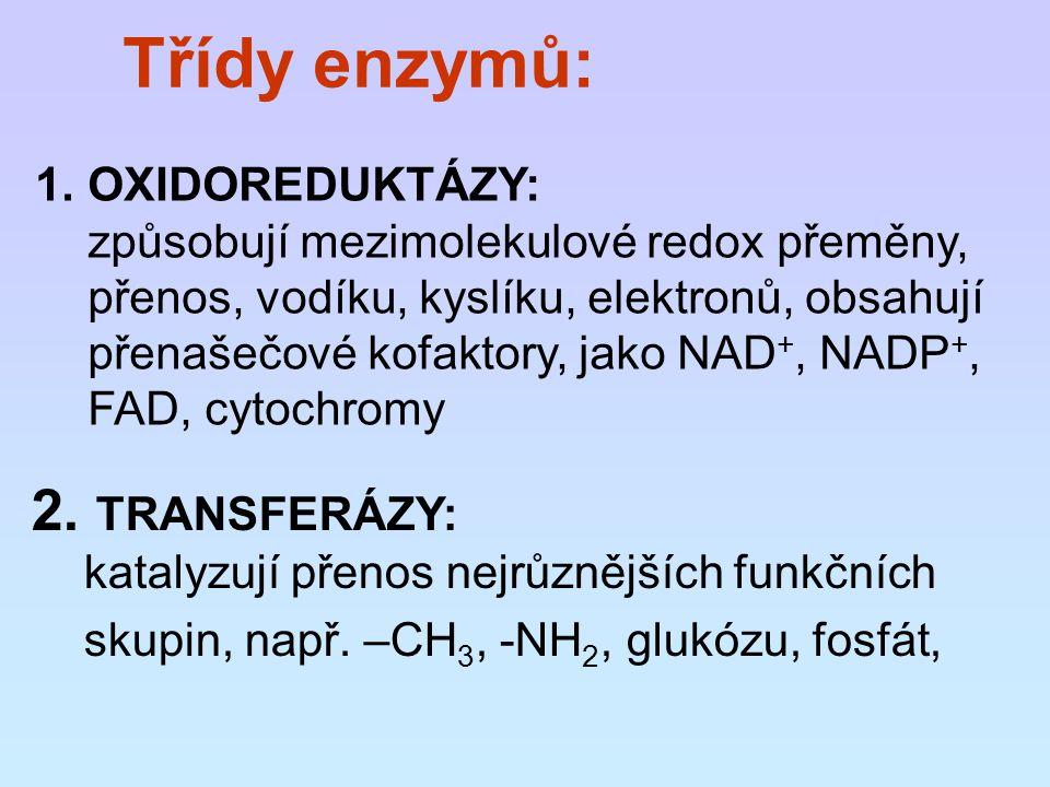 Třídy enzymů: 1.OXIDOREDUKTÁZY: způsobují mezimolekulové redox přeměny, přenos, vodíku, kyslíku, elektronů, obsahují přenašečové kofaktory, jako NAD +