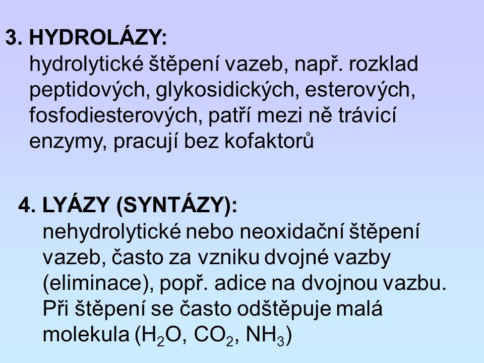 3. HYDROLÁZY: hydrolytické štěpení vazeb, např. rozklad peptidových, glykosidických, esterových, fosfodiesterových, patří mezi ně trávicí enzymy, prac