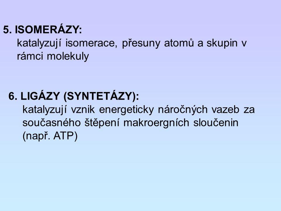 5. ISOMERÁZY: katalyzují isomerace, přesuny atomů a skupin v rámci molekuly 6. LIGÁZY (SYNTETÁZY): katalyzují vznik energeticky náročných vazeb za sou