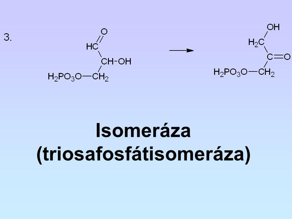 Isomeráza (triosafosfátisomeráza)