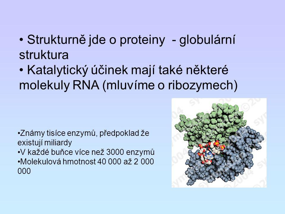 Strukturně jde o proteiny - globulární struktura Katalytický účinek mají také některé molekuly RNA (mluvíme o ribozymech) Známy tisíce enzymů, předpok