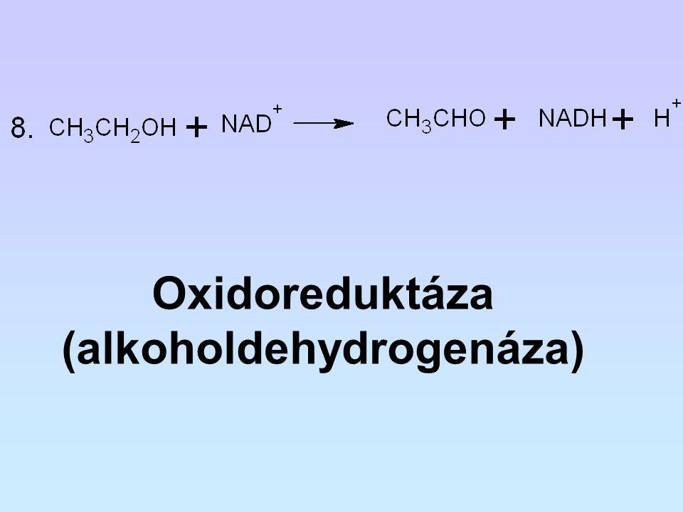Oxidoreduktáza (alkoholdehydrogenáza)