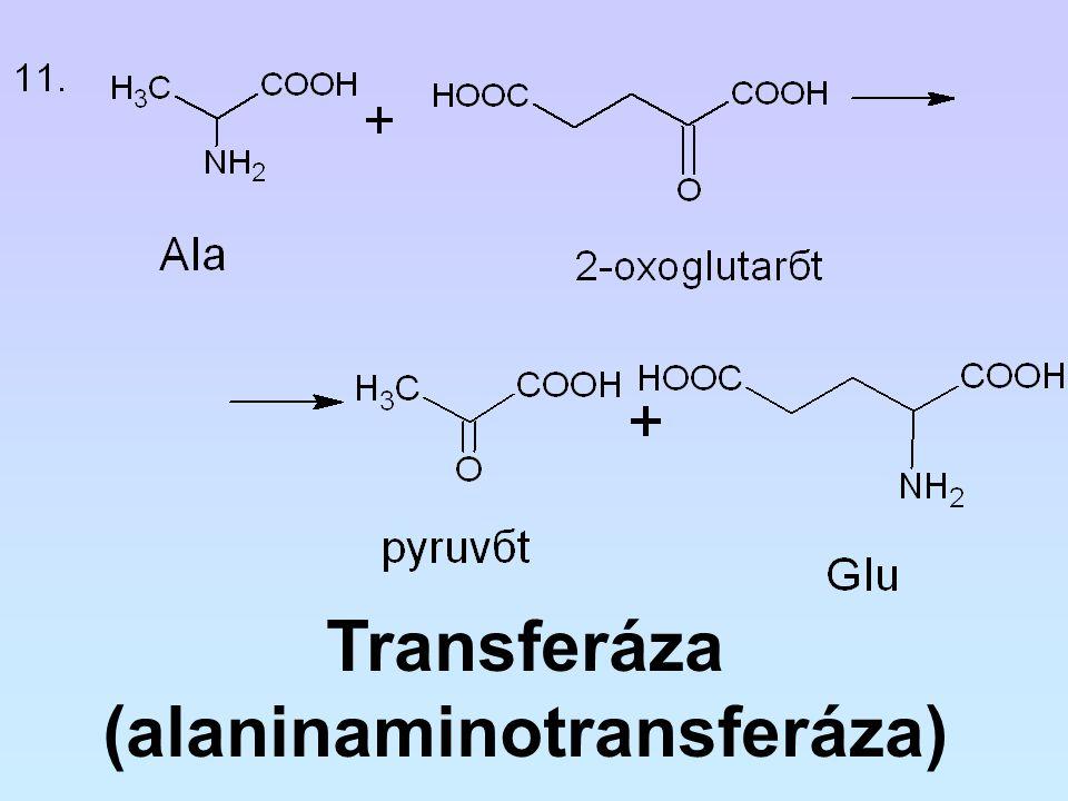Transferáza (alaninaminotransferáza)