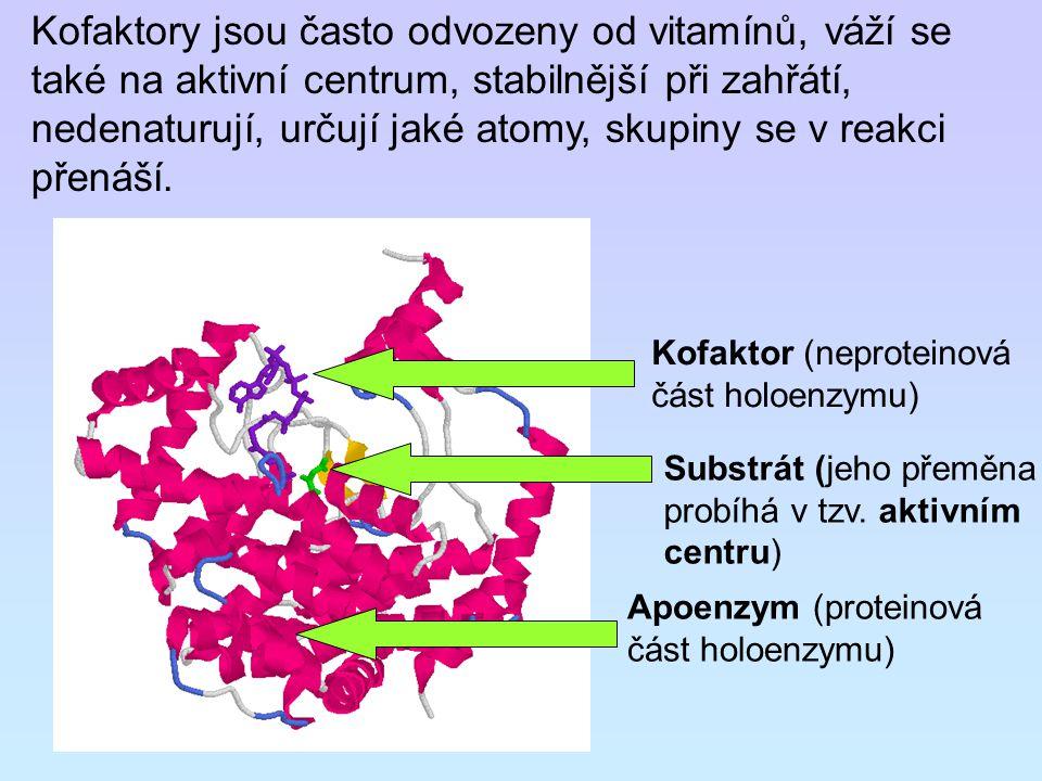 Kofaktory jsou často odvozeny od vitamínů, váží se také na aktivní centrum, stabilnější při zahřátí, nedenaturují, určují jaké atomy, skupiny se v rea