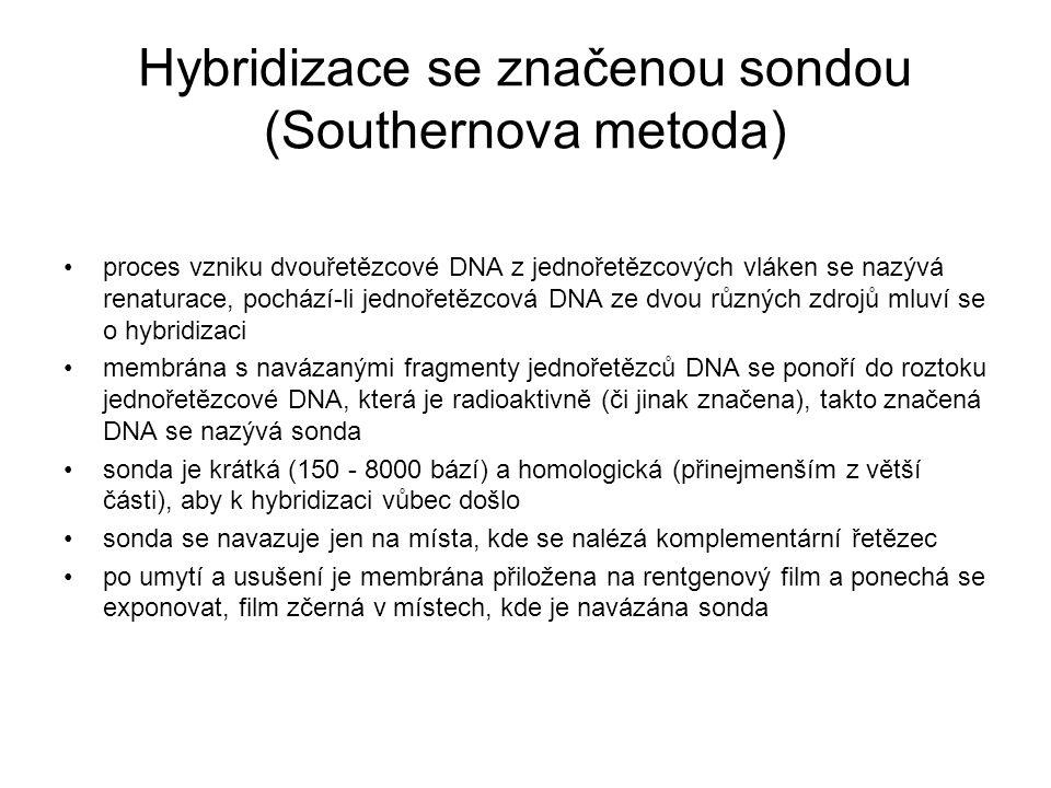Hybridizace se značenou sondou (Southernova metoda) proces vzniku dvouřetězcové DNA z jednořetězcových vláken se nazývá renaturace, pochází-li jednoře