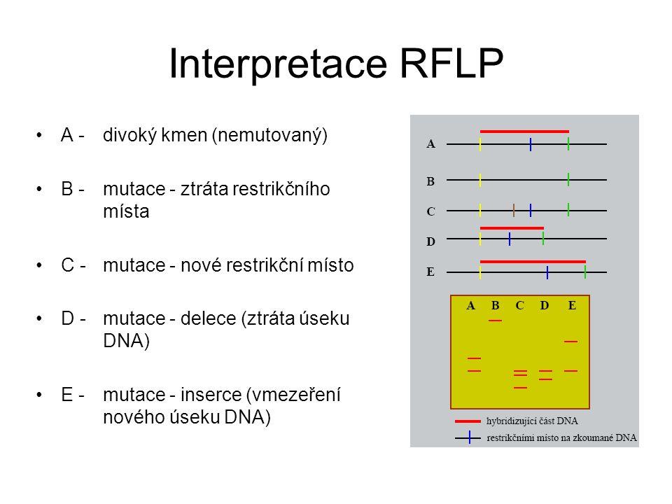 Interpretace RFLP A - divoký kmen (nemutovaný) B - mutace - ztráta restrikčního místa C - mutace - nové restrikční místo D - mutace - delece (ztráta ú
