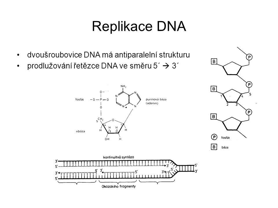 Replikace DNA dvoušroubovice DNA má antiparalelní strukturu prodlužování řetězce DNA ve směru 5´  3´